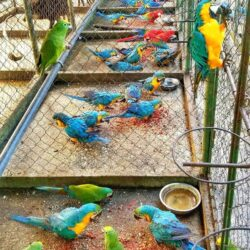 blue-and-gold-macaw-5d51e07594d17